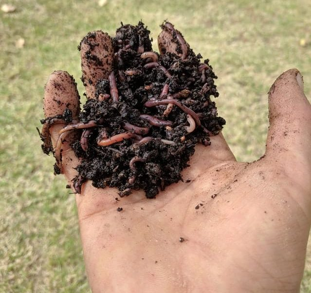 what do earthworms eat, earthworms lifespan, earthworms facts, earthworms composting, earthworms humus, earthworms fertility of soil