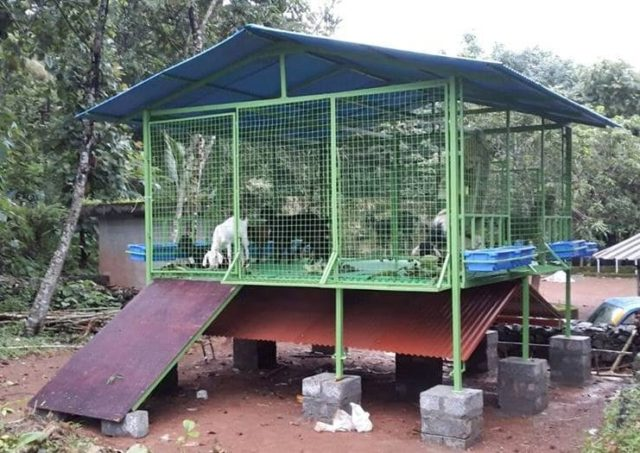 elevated goat shed
