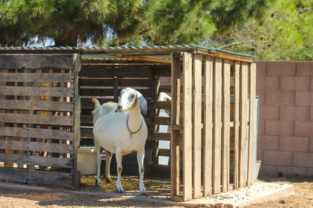 How to build a Goat House | Learn Natural Farming