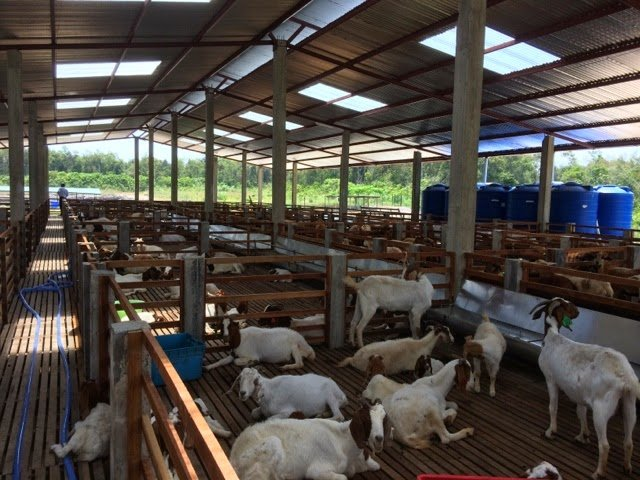 elevated goat shed, Goat Grazing Options