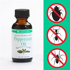 peppermint oil stink bugs