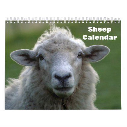 calendar of operations for sheep